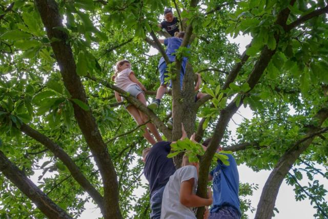 školní výlet do NP Podyjí, Kraví hora, Znojmo, děti na stromě
