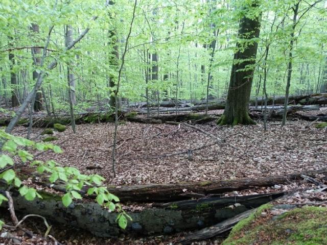 Národní přírodní rezervace Velký Špičák