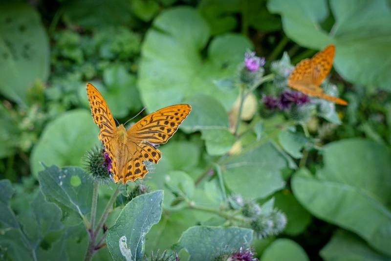 Národní park Podyjí, motýli